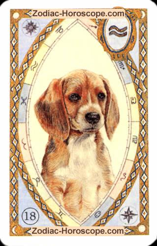 The dog Single love horoscope